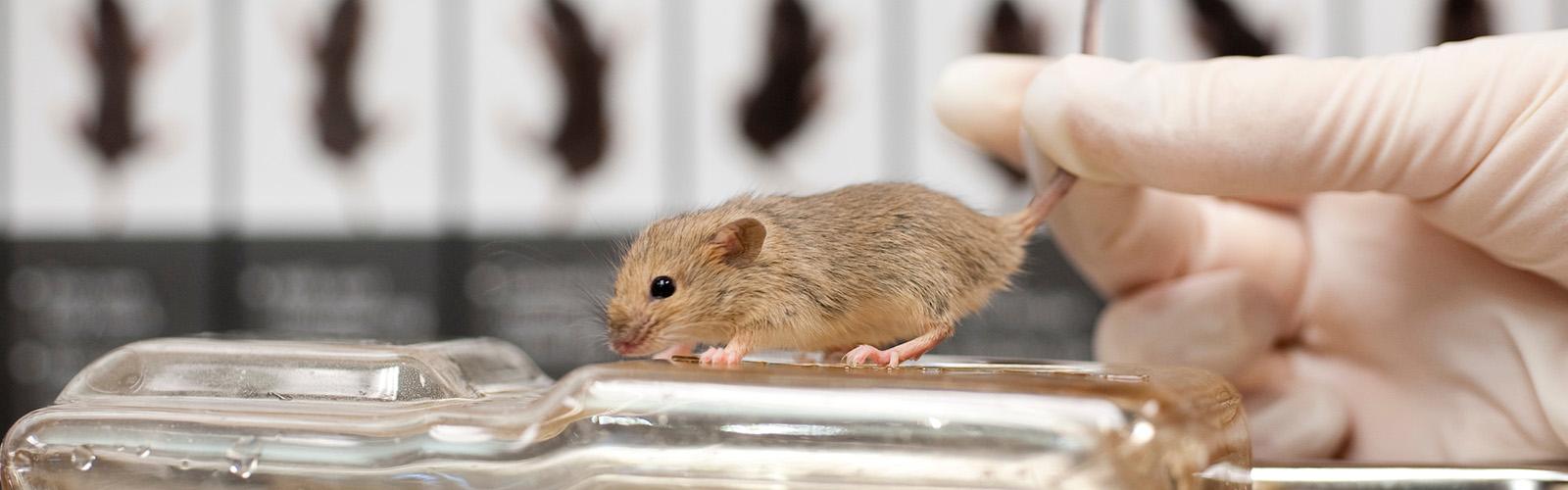 Rodent Models Core